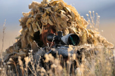 Article Suggests Gov. Sharp Shooters Kill Plover Enemies (Fox, Coyote etc.)