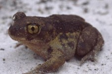 Expect Driving Detours In P-Town Because Of Toads... Wait, What?