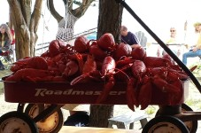 Cape Cod Problem Of The Day - Too Many Lobsters To Carry