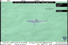 Two More Great White Sharks Tagged Yesterday - Duxbury Would Declare Martial Law