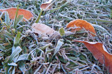Today In Cape Cod History - It Was 27 Degrees On 8/23/23 With The First Frost
