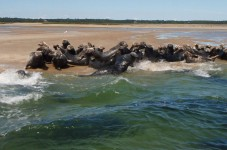 The Seals Have Officially Invaded Our Beaches In Eastham