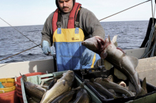 "NE Fisheries Council's Detailed Recommendation On Cod Crisis - ""Just Do Something"""