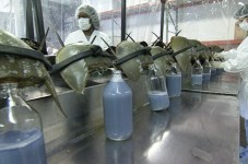 We Now Harvest The Blood Of Half A Million Horseshoe Crabs A Year