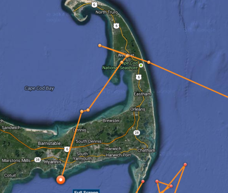 katharine cape cod shark4