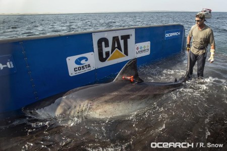 katharine cape cod shark5