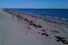 Storm Uncovers Century Old Shipwreck On Martha's Vineyard Beach