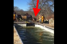 VIDEO: Police Rescue Horse Out Of Swimming Pool On Martha's Vineyard