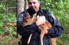CUTENESS ALERT! Edgartown PD Rescues Baby Deer