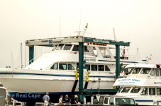 Raw Bar Booze Cruise Grounding Update - Pied Piper Now In Dry Dock