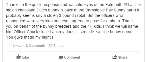 barnstable county fair stolen bunny2