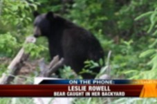 Great News Cape Cod - Bear Hunting Is Now Legal... Wait, What?