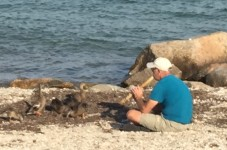 Just An Average Cape Cod Day - A Dude Playing The Flute For A Family Of Ducks At The Beach