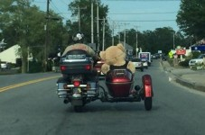Is There A Sidecar Convention On Cape Cod We Didn't Know About?